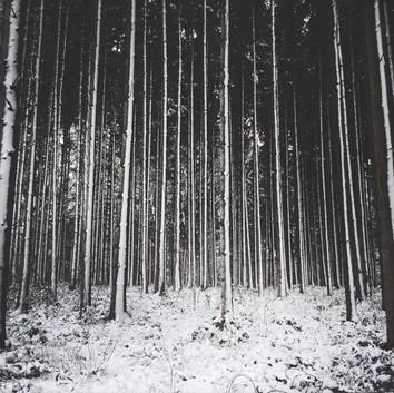 Loud Silence Of Nature - Woods (1) II Zuzana H. Marchandise for DAMAZU Studio
