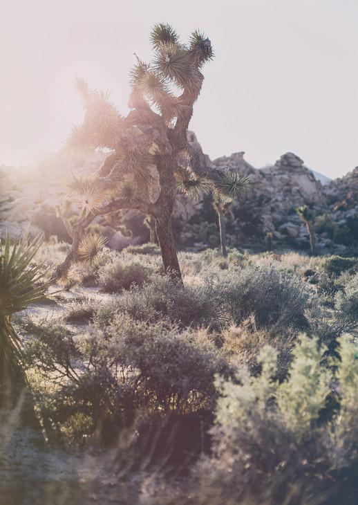 DesertSpringByMAZU__March2020(6028)ANALO