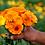 Thumbnail: Calendula Healing Balm