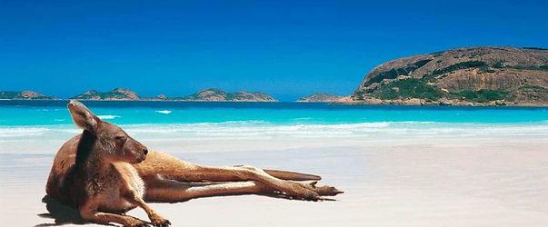 CANGURO EN PLAYAS DE AUSTRALIA.jpg