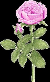 Naturkosmetik Dr. Hauschka Wohlgemut Rose