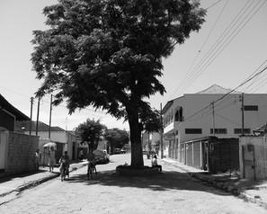 José Rennó, a Rua da Árvore