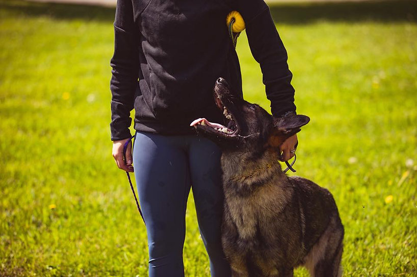 """Caius and Michaela practicing heeling for a sport called IGP or """"Schutzhund"""""""