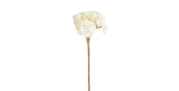 White Sedum