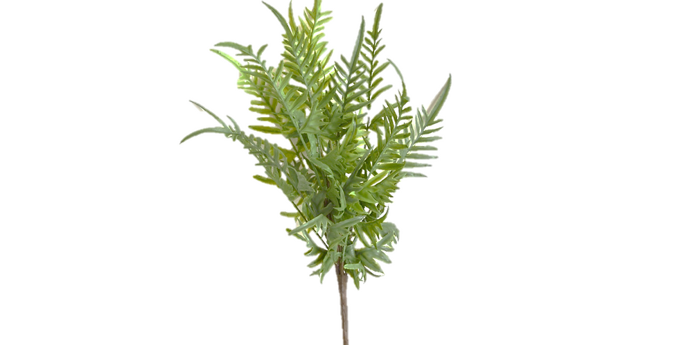 Fern Mixed Bush