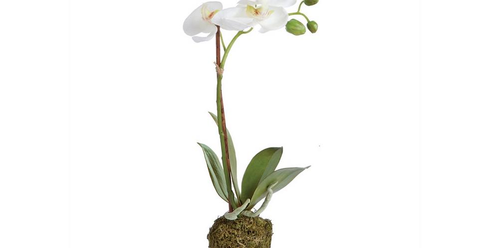 Drop-in Orchid
