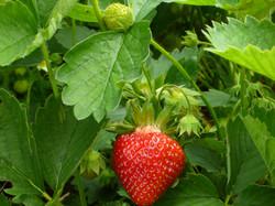 e Fruit 2