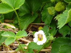 e fleurs 4