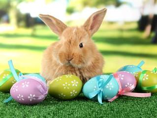 Por que o ovo e o coelho são símbolos da Páscoa?