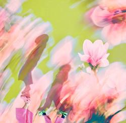 wandbild_Magnolia.jpg