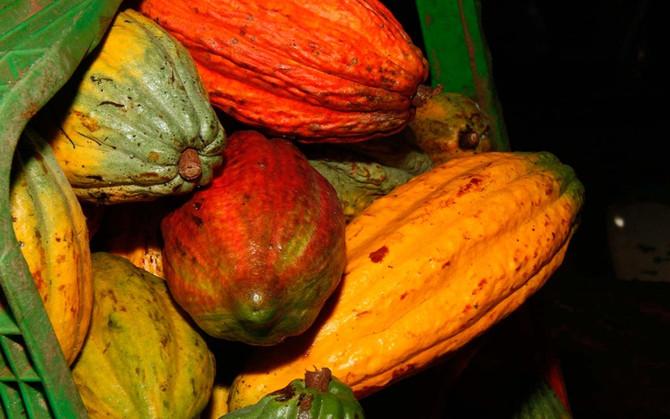 Esquecido império do cacau reativa 'turismo do chocolate' na Bahia