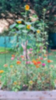 Community Garden 2019-a.jpg