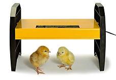 Chick Warmer.jpg