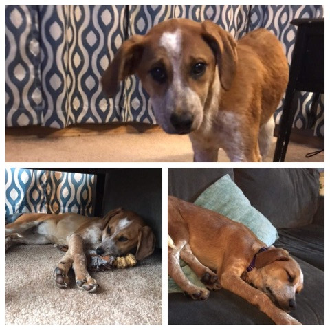 Awesome Paws Rescue Available Dogs
