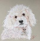 Portrait chien.jpeg