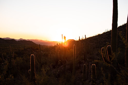 Saguaro Sunset 12 x 18 February Exclusive Print