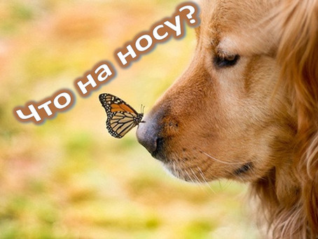 Ох, уж этот нос!  Oh, This Nose!
