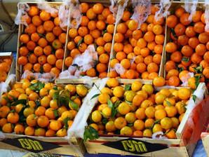 Новый год приходит с мандаринами   New Year Comes with Mandarins