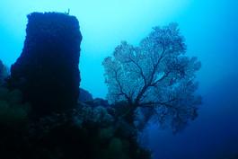 Barrel Sponge and Sea Fan