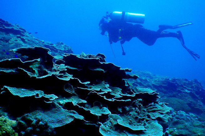 Diver on the Reef