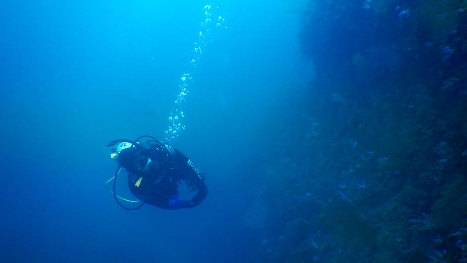 Diver at the Wall