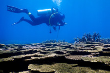 Diver and Coral