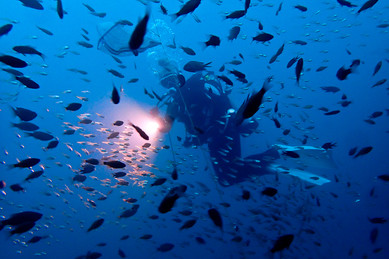 Diver and School of Fish