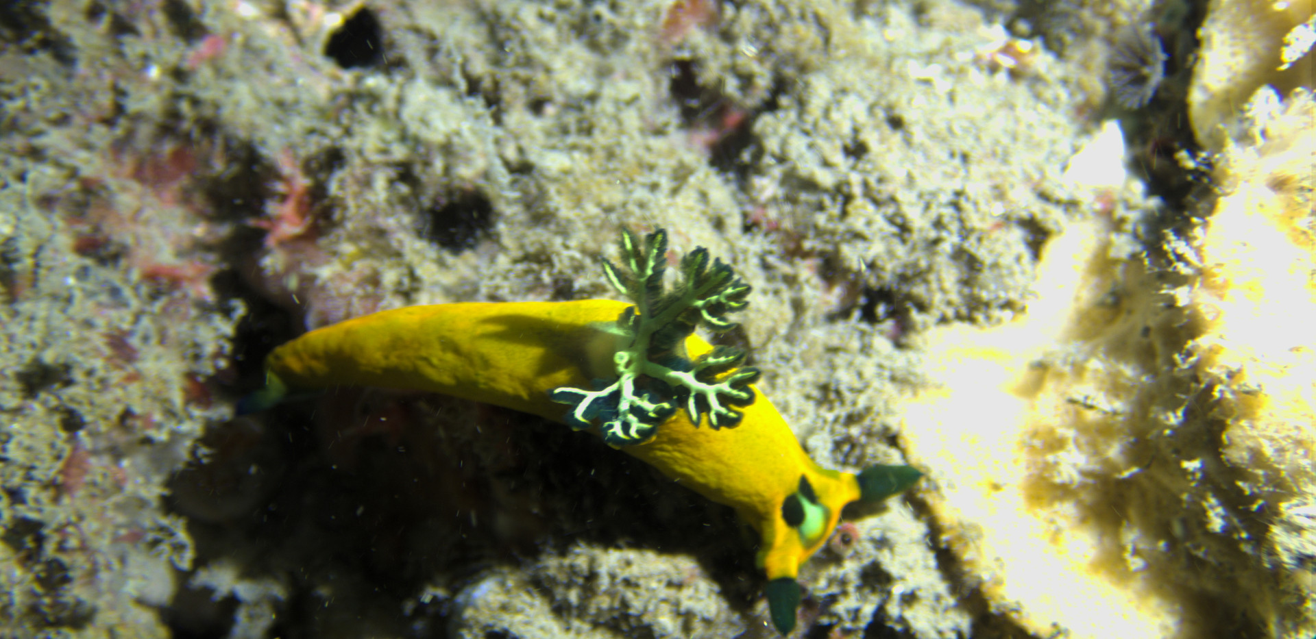 Yellow and Green Nudi