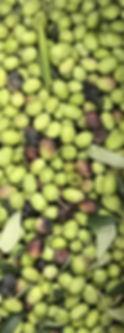 olive, olio fresco, le polpe