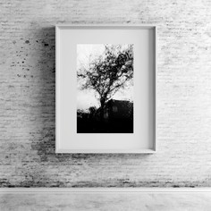 Rain tree 1.jpg