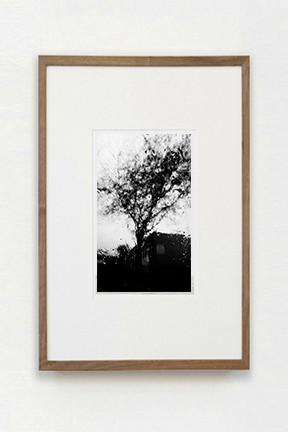 Rain Tree______$150.00 usd