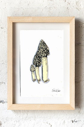 Morels_brown frame.jpg