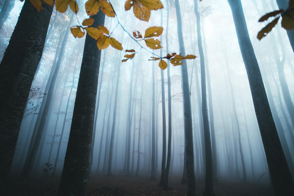 Misty conifer tree landscape