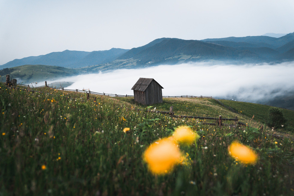 Wooden hut on the meadow at sunrise with fog and yellow flowers in the foreground