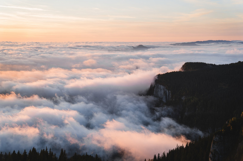 Stunning top view with mist over forest