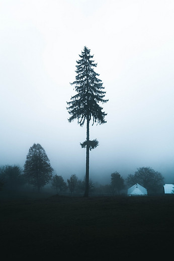 Lonely tree in foggy landscape