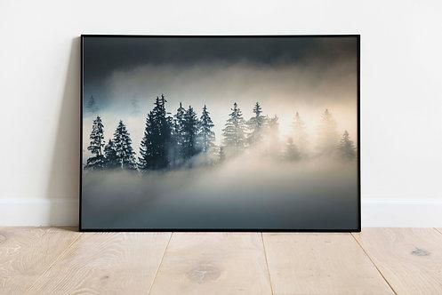 Foggy Trees At Sunrise