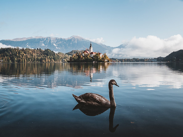 Amazing moody View On Bled Lake.jpg