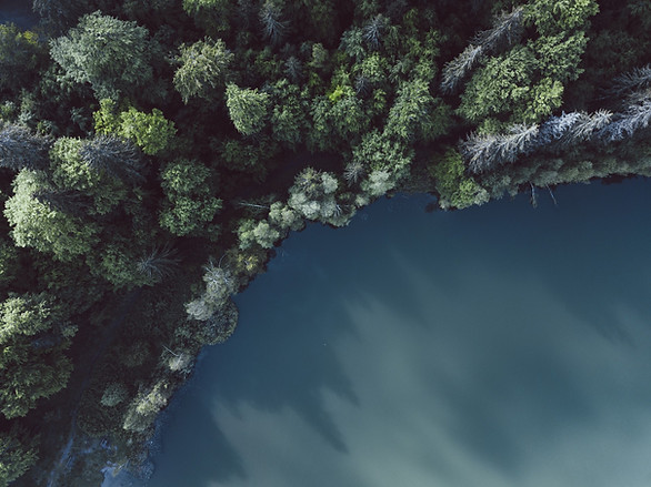 Aerial view of forest and lake