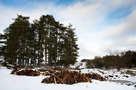 foret arbres auvergne neige bois ciel nuages
