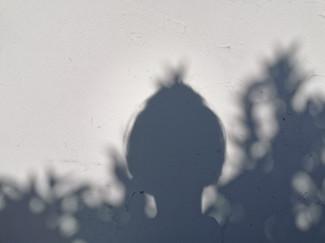 Autoportrait Confiné, A l'ombre d'un Lilas Mauve Parfumé _ 27.04.20