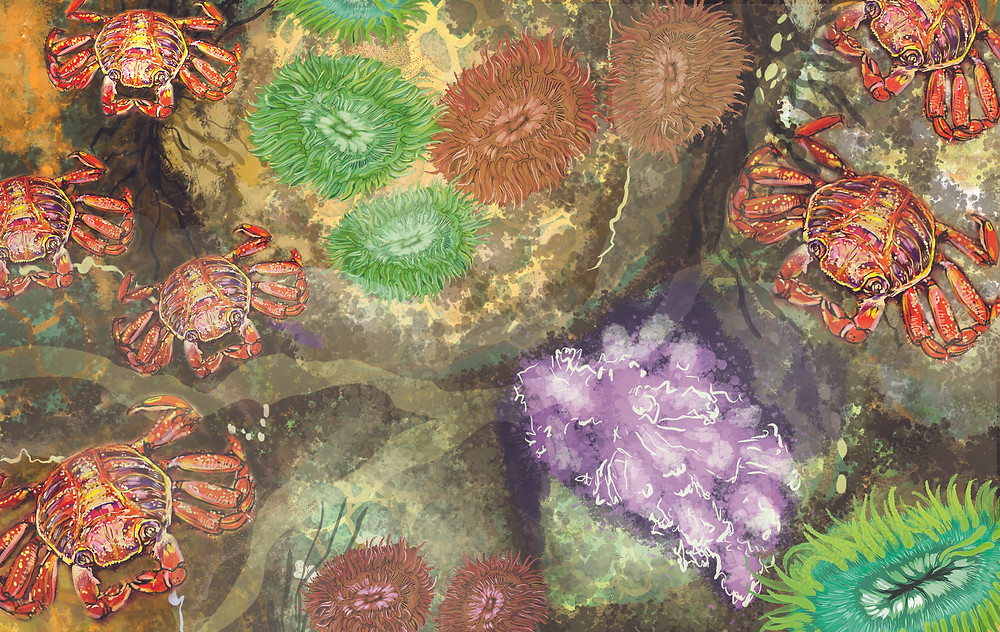 Crabs, anemone and corals in a tidepool
