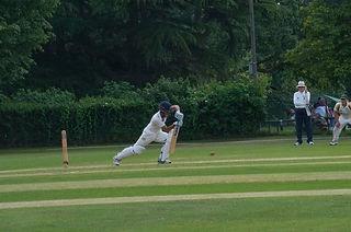 Adult Cricket.jpg