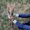 Thumbnail: Mikados géants
