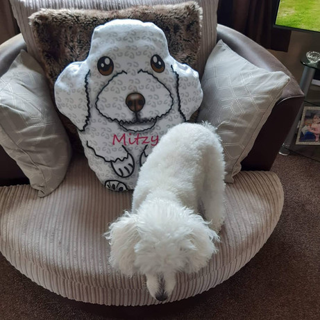 Custom-made poodle plush pillow