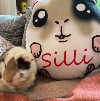 Custom made guinea pig plush pillow