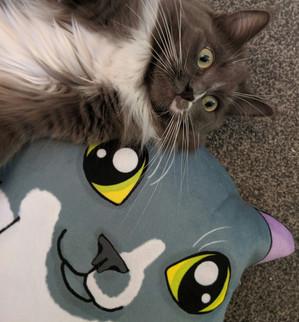 Misty posing her custom plush pillow