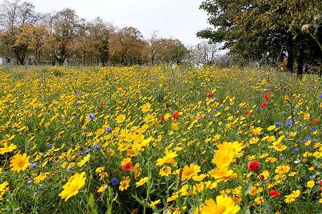 Bee Meadow.JPG