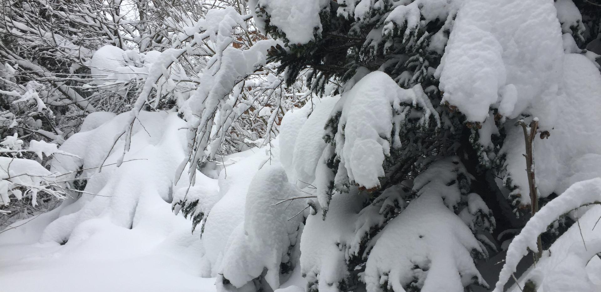 Winterzeit Hahnenklee