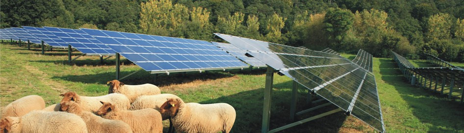 header_home_solarfarm_sheep_UK.jpg